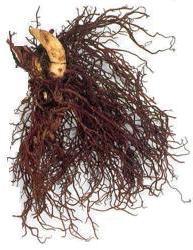 Black Cohosh Roots