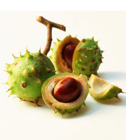 horse-chestnut-extract